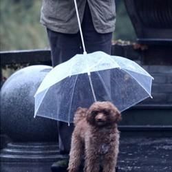 Laisse - Parapluie pour Chien