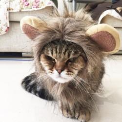 Crinière pour Chat