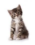 Des protuits spécialement conçus pour vos chats